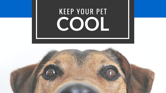 3.30.16 - Summer Pet Safety Img